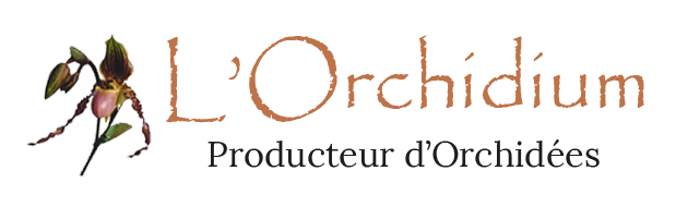 logo-orchidium
